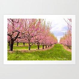 Pink Flowering Trees Art Print