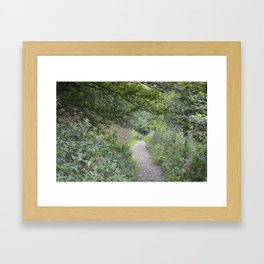 Footpath in a Forest Framed Art Print