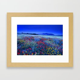 Spring poppies at blue hour Framed Art Print