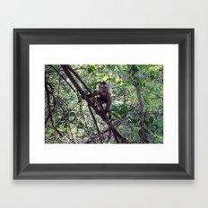 Monkey Sanctuary – Monkey with attitude Framed Art Print