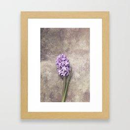 Light Purple Hyacinth Framed Art Print