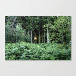 Sunrise through the spruce wood Canvas Print