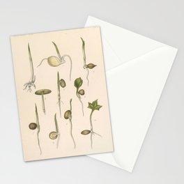 Seed Botany Stationery Cards