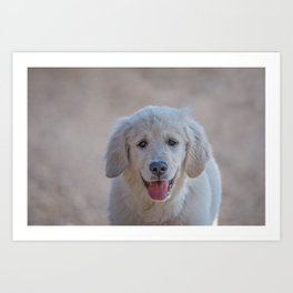Young Golden Retriever breed dog with light fur stares into your eyes Art Print