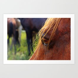 Strong Island Pony Eyes Art Print