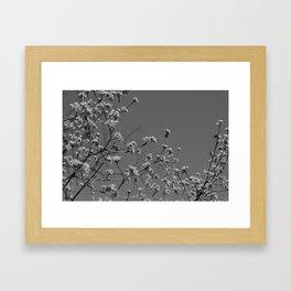 Springtime Flowers Framed Art Print