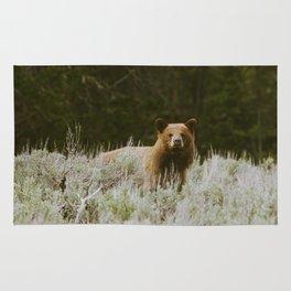 Bush Bear Rug