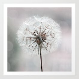 Delicate Dandelion Flower in soft light Art Print