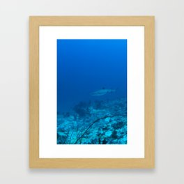 White-tip shark Framed Art Print