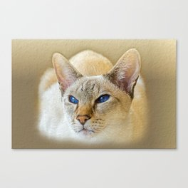 SIAMESE CAT LOVE Canvas Print
