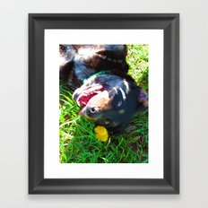 Dog Tanning Framed Art Print