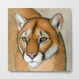 Cougar Mountain Lion Puma Wild Cat Portrait Metal Print