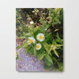 Three Little Flowers Metal Print