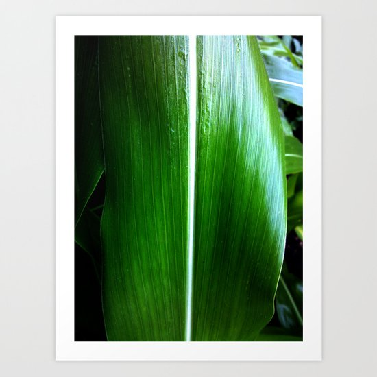Corn Leaf Art Print