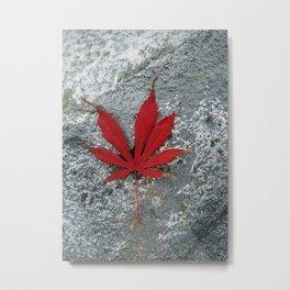 Japanese maple leaf on Rock Metal Print
