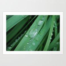 water on grass Art Print