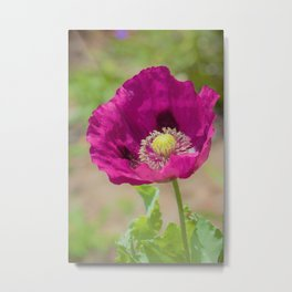 Violet Vision by Reay of Light Photography Metal Print