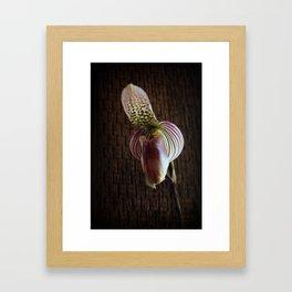 Mutant Ninja Slipper Orchid Framed Art Print