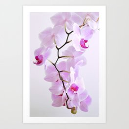 Hanging Orchid Blooms Art Print