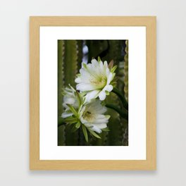 Cereus Morning  Framed Art Print