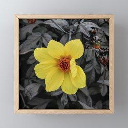 yellow flower Framed Mini Art Print