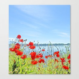 Red poppies in the lakeshore Canvas Print