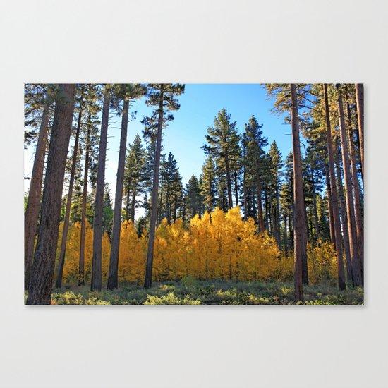 Fall Foliage Canvas Print
