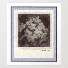 Crabapple Art Print
