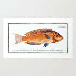Brasilian Wrasse (Labrus brasiliensis) from Ichtylogie, or Natural History General and Particular of Art Print