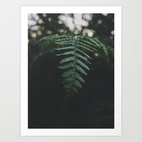 fern Art Prints featuring Fern by Bor Cvetko