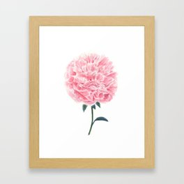 Watercolor peony painting Framed Art Print