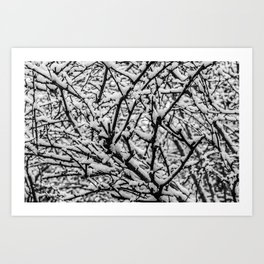 Cotton Snow Art Print