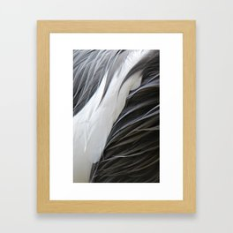 Textura: Grey Crowned Crane Feathers Framed Art Print