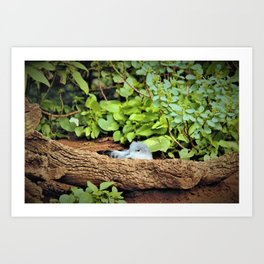 Nestling Shearwater Chick in Kauai by Reay of Light Art Print