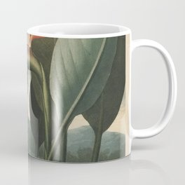 Henderson, Peter C. (d.1829) - The Temple of Flora 1807 - The Queen (Bird of Paradise Flower) Coffee Mug