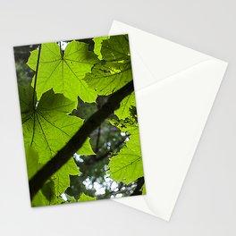 Fine Art Breathtaking Alaskan Spectacular Lush Summer Leaves Stationery Cards