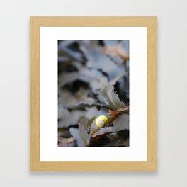 Water Snail Amongst Seaweed Framed Art Print