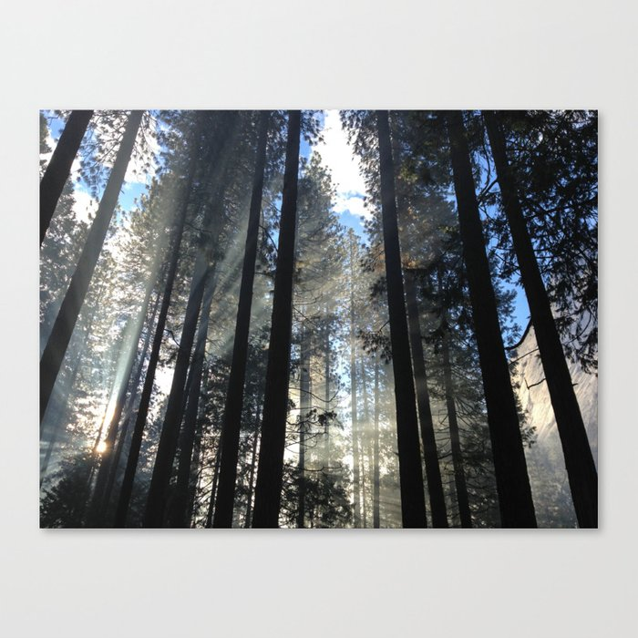 Sunlight Shines Through the Trees Canvas Print