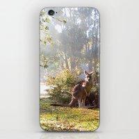 kangaroo iPhone & iPod Skins featuring Kangaroo by Nove Studio