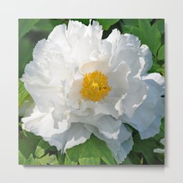 Open Beauty Metal Print
