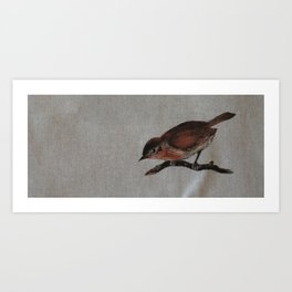 A red Bird Art Print