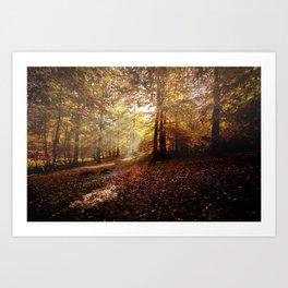 Sunbeam in the forest Art Print