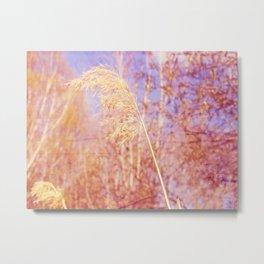 Reed 1 Metal Print