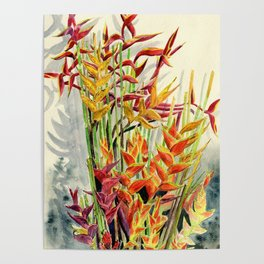 Heliconia Bouquet Poster