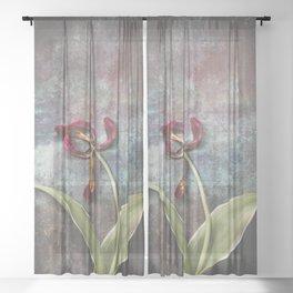 Faded Tulip Sheer Curtain