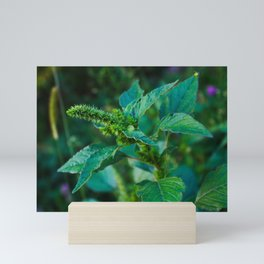 Dangerous weed in agriculture Mini Art Print