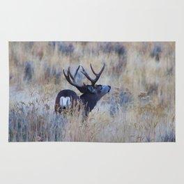 Black Tail Buck Rug