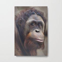Orangutan Portrait Metal Print