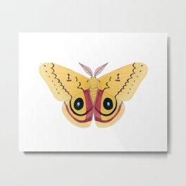 io moth (Automeris io) male specimen 2 Metal Print
