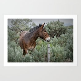 Mule in Wyoming Art Print